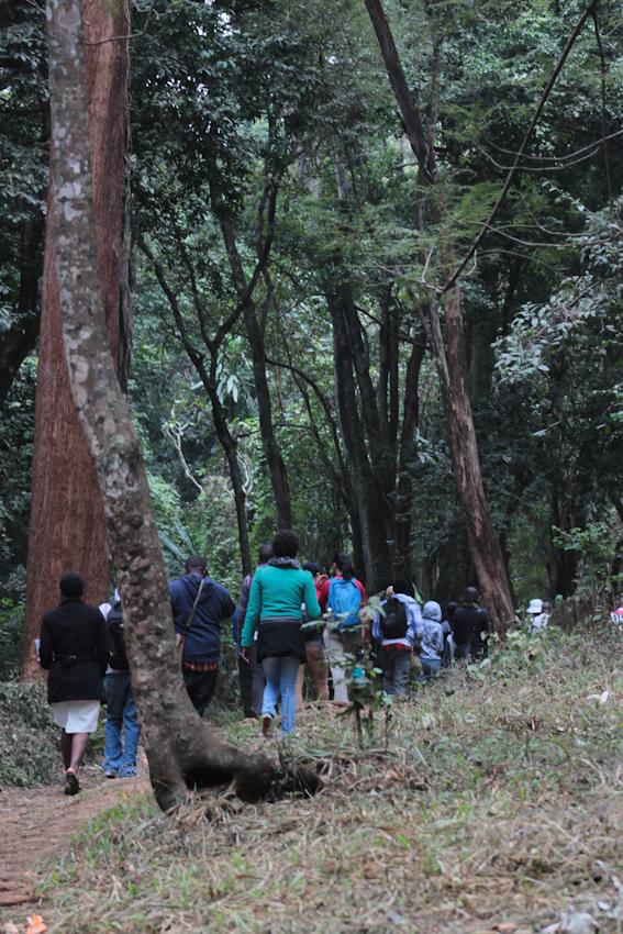City Park Forest, Nairobi.