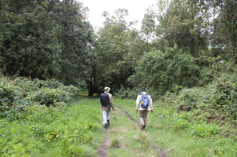 Hikers in Eburu Forest, Kenya.
